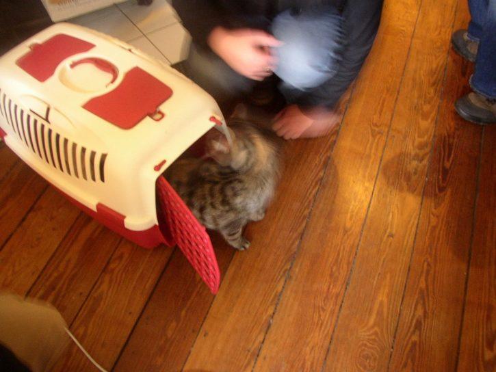 Die Katze zieht ein