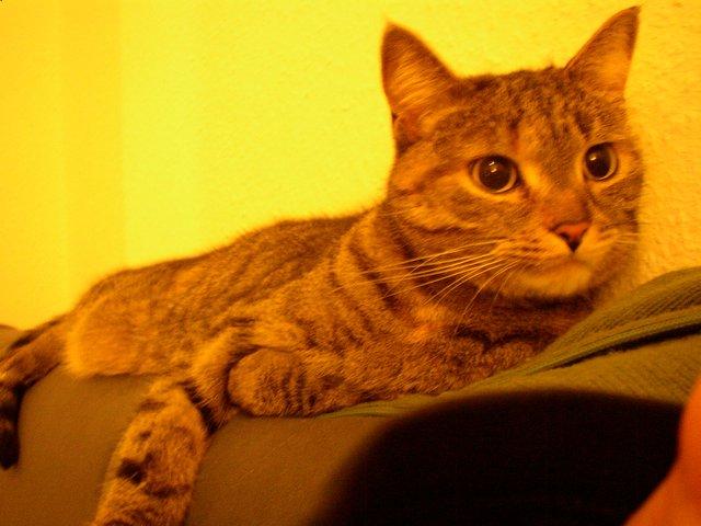 Ich habe eine Katze. Hallo!