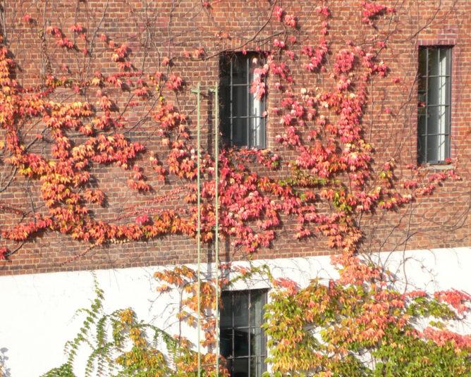 Häuserwand mit rotem Laub