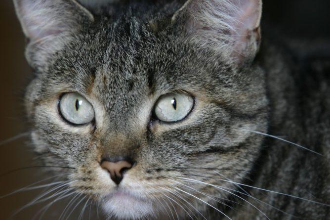Katze Frieda in groß