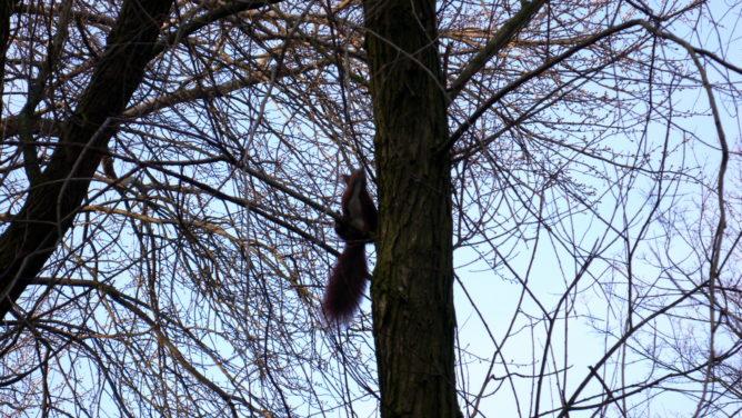 Der Teufel ist ein Eichhörnchen