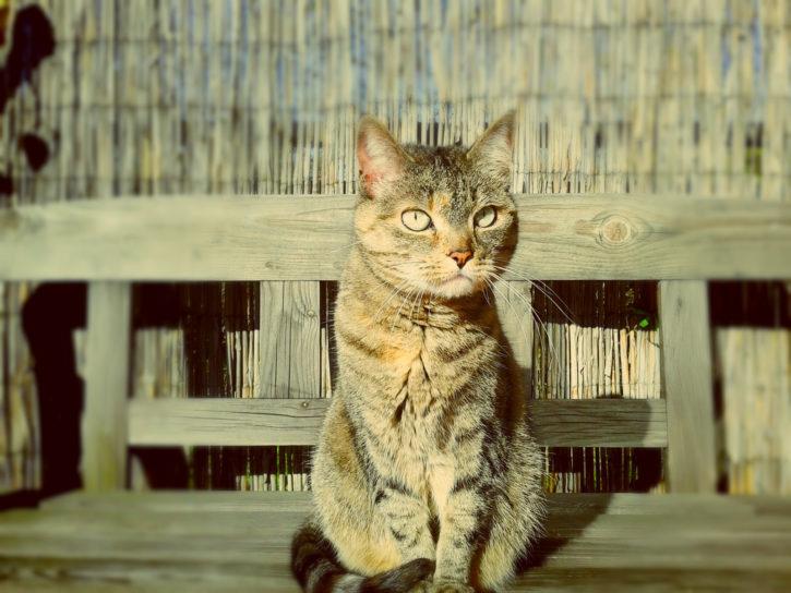 Katze auf Terrasse der Wohnung.