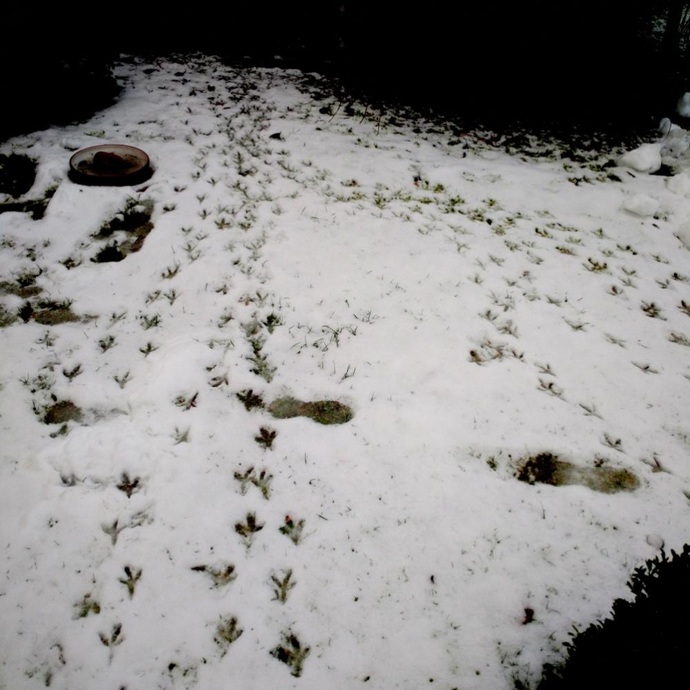 Foto von Vogelspuren in der Einflugschneise zum Vogelhaus.