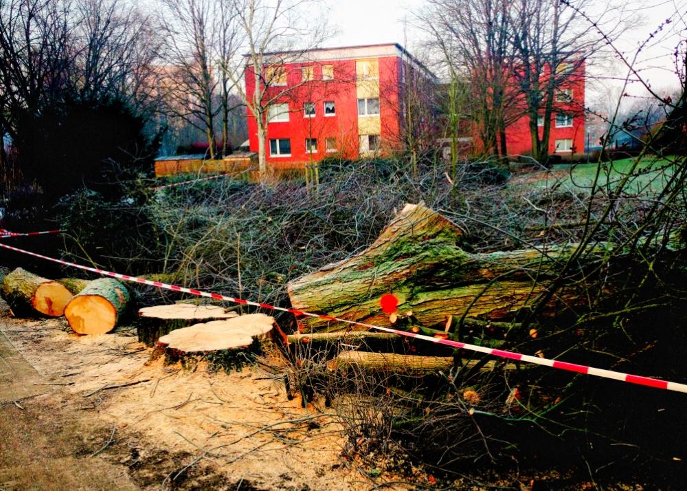 Gefällter Baum im Grünstreifen Wildschwanbrook in Meiendorf