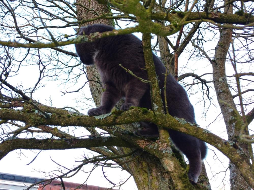 Foto einer Katze in einem Baum