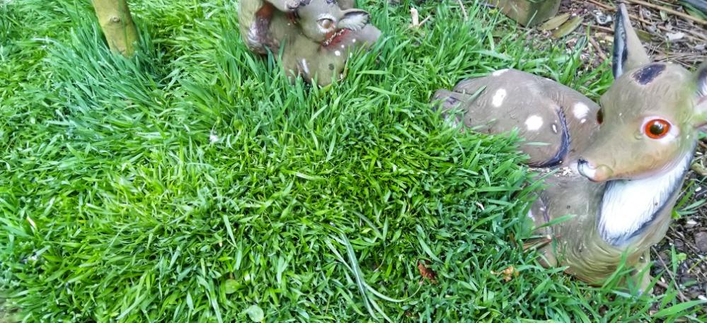 Kurze Woche, Seife, Rasen,