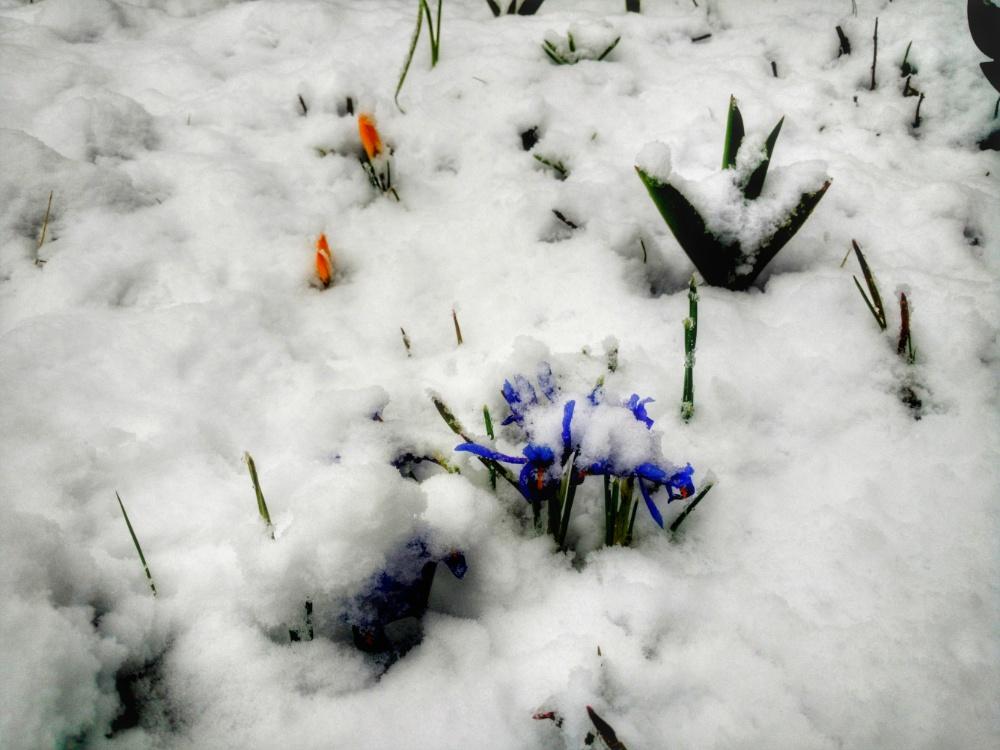 Foto mit Blumen im Schnee