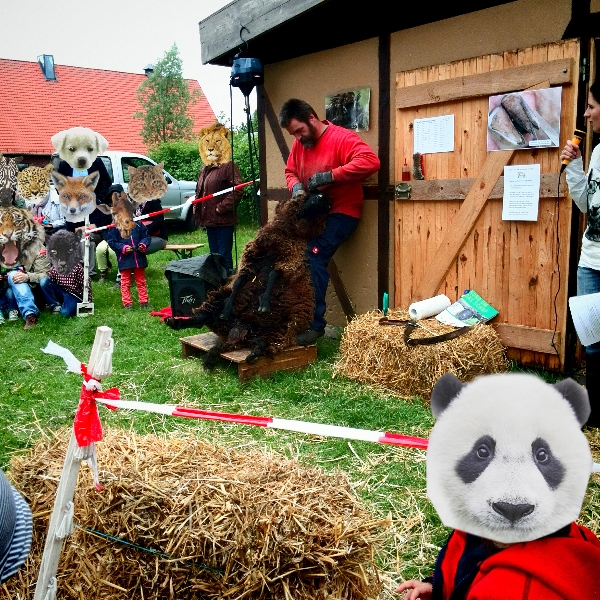 Gut Karlshöhe - Maifest 2015 mit Schafschur
